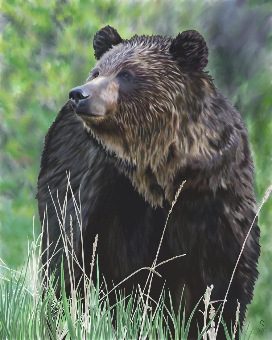 Illustration_Wildlife_GrizzlyBear_GSG_2012BLOG
