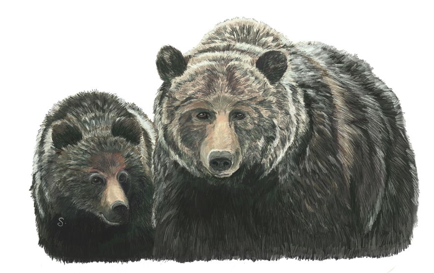 Wildlife_Grizzly_64AndCub_2013BLOG